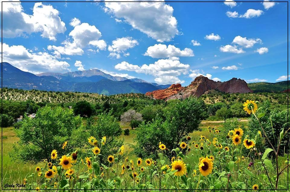 Sunflowers at Garden of the Gods
