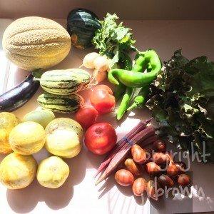 CSA Produce August 2015